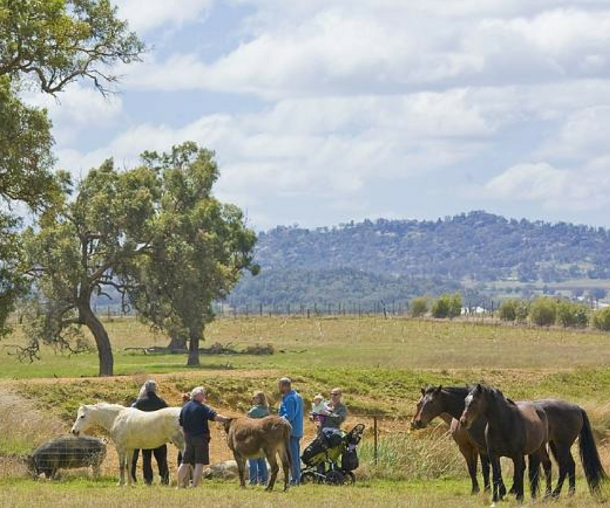 Mudgee farm tours